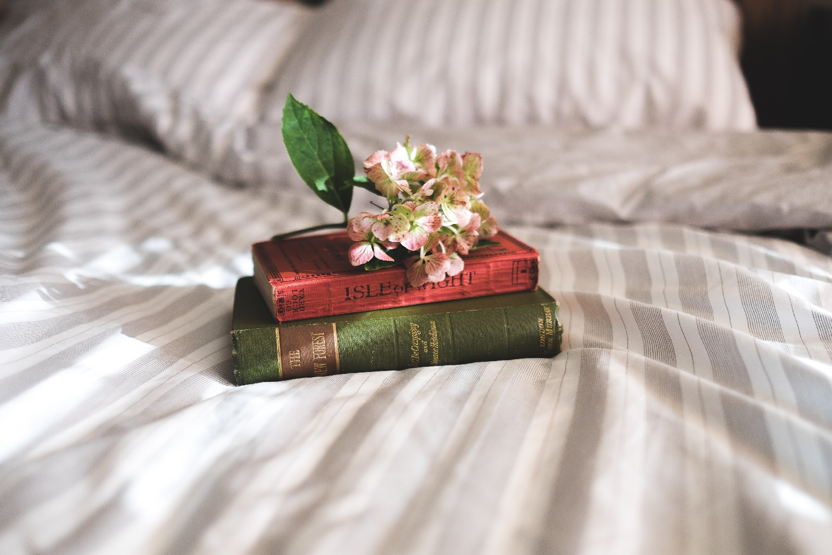 Cultivating Curiosity as a Reader: 12 Contemporary Fiction Books for Students
